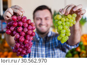 Купить «Smiling man selling grapes in shop.», фото № 30562970, снято 26 октября 2016 г. (c) Tryapitsyn Sergiy / Фотобанк Лори