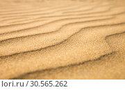 Купить «Sandy waves, beach on Ceylon coast», фото № 30565262, снято 21 февраля 2017 г. (c) Tryapitsyn Sergiy / Фотобанк Лори