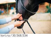 Купить «Female rider keeps the horse for a reason», фото № 30568534, снято 17 сентября 2017 г. (c) Tryapitsyn Sergiy / Фотобанк Лори