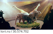 Elephants and giraffes, show on arena in circus. Стоковое фото, фотограф Tryapitsyn Sergiy / Фотобанк Лори