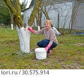 Купить «Весенняя работа в саду, побелка плодовых деревьев», фото № 30575914, снято 7 апреля 2019 г. (c) Ирина Борсученко / Фотобанк Лори