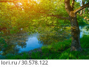 Купить «Summer forest landscape - forest deciduous oak tree on the bank of the river in summer sunny morning», фото № 30578122, снято 14 июня 2012 г. (c) Зезелина Марина / Фотобанк Лори