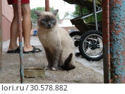 Купить «Homeless sad cat on city street near house. Photo of homeless animal», фото № 30578882, снято 14 июля 2006 г. (c) Dmitry Domashenko / Фотобанк Лори