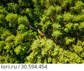 Купить «Aerial view from the drone of environmentally friendly foliage forest with a dirt road on a summer sunny day. Top view», фото № 30594454, снято 14 августа 2018 г. (c) Ярослав Данильченко / Фотобанк Лори