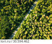 Купить «The road with a passing car through the foliage of the forest on a sunny day. Aerial view of the drone as a natural layout», фото № 30594462, снято 14 августа 2018 г. (c) Ярослав Данильченко / Фотобанк Лори
