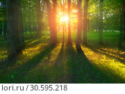 Купить «Forest summer landscape - forest trees with grass on the foreground and sunlight shining through the trees», фото № 30595218, снято 25 мая 2018 г. (c) Зезелина Марина / Фотобанк Лори