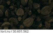 Купить «Newborn gren sea turtles crawling on each other. Top view, Slow motion, Hikkaduwa, Sri Lanka», видеоролик № 30601562, снято 18 апреля 2019 г. (c) Некрасов Андрей / Фотобанк Лори