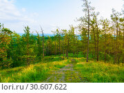 Forest landscape with trees growing on the mountain slopes under soft sunset light, forest mountain nature. Стоковое фото, фотограф Зезелина Марина / Фотобанк Лори