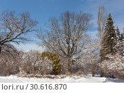 Купить «Пешеходные дорожки в московском городском парке. Деревья в снегу. Солнечный зимний день. Отдыхающие горожане гуляют по парку и катаются на лыжах», фото № 30616870, снято 14 февраля 2019 г. (c) Юрий Лобанов / Фотобанк Лори