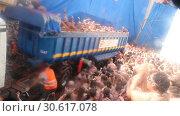 Купить «People during La Tomatina festival. La Tomatina festival where people are fighting with tomatoes at street», видеоролик № 30617078, снято 29 августа 2018 г. (c) Яков Филимонов / Фотобанк Лори