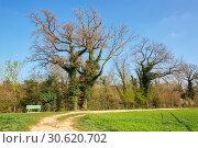 Купить «Весенний парк. Коммуна Филлиген, кантон Аргау, Швейцария.», фото № 30620702, снято 15 апреля 2019 г. (c) Bala-Kate / Фотобанк Лори