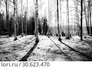 Купить «Nature of Sweden.», фото № 30623470, снято 16 апреля 2019 г. (c) age Fotostock / Фотобанк Лори