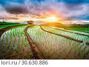 Купить «Terrace rice field of Ban pa bong piang in Chiangmai, Thailand.», фото № 30630886, снято 14 июля 2017 г. (c) easy Fotostock / Фотобанк Лори