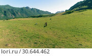 Купить «Flight over wild horses herd on meadow. Spring mountains wild nature. Freedom ecology concept.», видеоролик № 30644462, снято 12 ноября 2017 г. (c) Александр Маркин / Фотобанк Лори