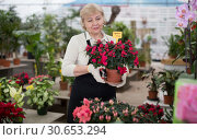 Купить «Woman gardener is taking care of flowers with secateur», фото № 30653294, снято 23 февраля 2018 г. (c) Яков Филимонов / Фотобанк Лори