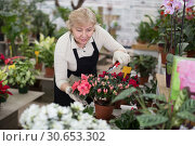 Купить «Adult woman is pruning blooming flowers on her work place», фото № 30653302, снято 23 февраля 2018 г. (c) Яков Филимонов / Фотобанк Лори