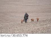 Купить «The picking up team walking to the next drive with thier dogs», фото № 30653774, снято 20 сентября 2019 г. (c) Ingram Publishing / Фотобанк Лори