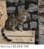 Купить «Cat on a bench, Budva, Montenegro», фото № 30654194, снято 12 сентября 2017 г. (c) Ingram Publishing / Фотобанк Лори