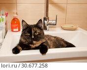 Купить «Cat sitting on wash basin», фото № 30677258, снято 31 декабря 2018 г. (c) Наталья Двухимённая / Фотобанк Лори