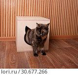 Купить «Cat in the cat house», фото № 30677266, снято 18 марта 2019 г. (c) Наталья Двухимённая / Фотобанк Лори