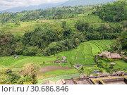 Купить «Bali rural landscape, farm and rice fields top view», фото № 30686846, снято 27 сентября 2010 г. (c) Юлия Бабкина / Фотобанк Лори
