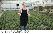 Купить «Woman gardener working with tomato seedlings in greenhouse», видеоролик № 30694150, снято 26 апреля 2019 г. (c) Яков Филимонов / Фотобанк Лори