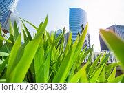 La Defense skyscrapers viewed through green grass. Стоковое фото, фотограф Сергей Новиков / Фотобанк Лори