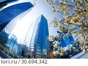 Towers of La Defense district and blossomed trees. Стоковое фото, фотограф Сергей Новиков / Фотобанк Лори