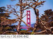 Golden Gate Bridge viewed through tree branches (2015 год). Стоковое фото, фотограф Сергей Новиков / Фотобанк Лори