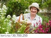 Купить «senior gardener basket», фото № 30700250, снято 19 сентября 2019 г. (c) Яков Филимонов / Фотобанк Лори