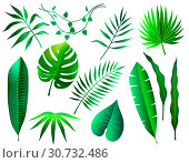 set of different green tropical leaves on white background. Стоковая иллюстрация, иллюстратор Татьяна Трощева / Фотобанк Лори