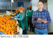 Купить «Serious owner of fruit warehouse checking work of female employees engaged in tangerines sorting», фото № 30739026, снято 15 декабря 2018 г. (c) Яков Филимонов / Фотобанк Лори