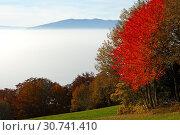 Купить «Herbstnebel im Pay de Gex, Jura, Frankreich», фото № 30741410, снято 19 июля 2019 г. (c) age Fotostock / Фотобанк Лори