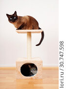 Купить «Two cats resting on small cat tower or cat tree», фото № 30747598, снято 29 января 2020 г. (c) easy Fotostock / Фотобанк Лори