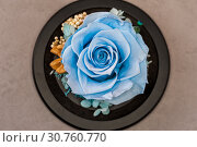 Купить «Close up of blue rose on yellow background», фото № 30760770, снято 20 мая 2019 г. (c) Pavel Biryukov / Фотобанк Лори