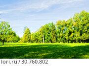 Купить «Summer landscape in sunny weather - forest trees growing in the park», фото № 30760802, снято 21 сентября 2017 г. (c) Зезелина Марина / Фотобанк Лори