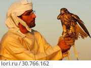 Jagdfalke sitzt auf der Hand des Falkners, Falkentraining in Dubai, Vereinigte Arabische Emirate, VAE / Hunting falcon perched on the hand of the falconer... Стоковое фото, фотограф Zoonar.com/G Fischer / age Fotostock / Фотобанк Лори