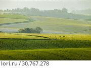 Купить «Sunrise in South Downs National Park in West Sussex, England.», фото № 30767278, снято 13 апреля 2019 г. (c) age Fotostock / Фотобанк Лори
