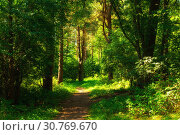Купить «Forest landscape in sunny weather - forest trees and narrow path lit by soft sunlight. Forest nature in sunny day», фото № 30769670, снято 17 августа 2018 г. (c) Зезелина Марина / Фотобанк Лори