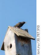 Купить «Starling sits on a nesting box», фото № 30787910, снято 22 апреля 2019 г. (c) Argument / Фотобанк Лори