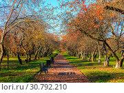 Купить «Autumn and yellow maple leaves in the park in Kolomenskoye park in autumn season aerial view, Moscow, Russia», фото № 30792210, снято 20 ноября 2019 г. (c) Mikhail Starodubov / Фотобанк Лори
