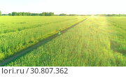 Купить «Aerial view on young boy, that rides a bicycle thru a wheat grass field on the old rural road. Sunlight and beams.», видеоролик № 30807362, снято 7 мая 2019 г. (c) Александр Маркин / Фотобанк Лори