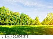 Купить «Summer landscape in sunny day - forest trees growing in the park», фото № 30807518, снято 21 сентября 2017 г. (c) Зезелина Марина / Фотобанк Лори
