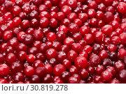 Купить «Frozen cranberries», фото № 30819278, снято 4 июля 2016 г. (c) Мельников Дмитрий / Фотобанк Лори