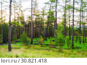 Купить «Forest landscape with pine forest trees on the mountain slope. Mountain forest summer nature scene», фото № 30821418, снято 23 августа 2013 г. (c) Зезелина Марина / Фотобанк Лори