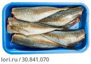 Купить «Atlantic horse mackerel on blue tray», фото № 30841070, снято 19 июля 2019 г. (c) Яков Филимонов / Фотобанк Лори
