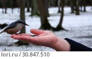 Купить «A bird sits on a woman's palm and eats seeds», видеоролик № 30847510, снято 19 июня 2018 г. (c) Aleksandr Sulimov / Фотобанк Лори