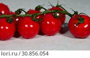 Купить «Cherry tomato rolls to bunch of fresh red tomatoes», видеоролик № 30856054, снято 28 мая 2019 г. (c) Anton Eine / Фотобанк Лори