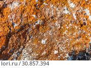 Купить «Orange lichens on the gray stone. The indicator of the purity of the environmental situation», фото № 30857394, снято 17 марта 2019 г. (c) Наталья Волкова / Фотобанк Лори
