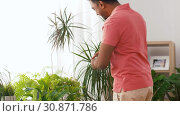 Купить «indian man taking care of houseplants at home», видеоролик № 30871786, снято 27 мая 2019 г. (c) Syda Productions / Фотобанк Лори